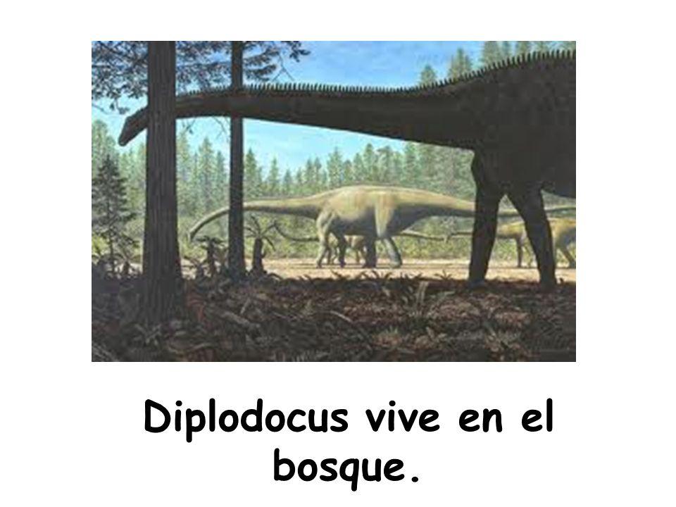 Diplodocus vive en el bosque.