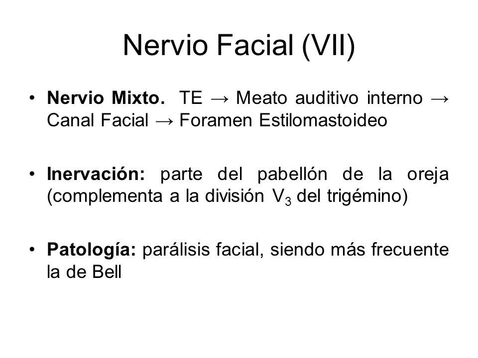 Nervio Facial (VII) Nervio Mixto. TE → Meato auditivo interno → Canal Facial → Foramen Estilomastoideo.
