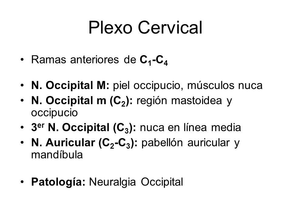 Plexo Cervical Ramas anteriores de C1-C4