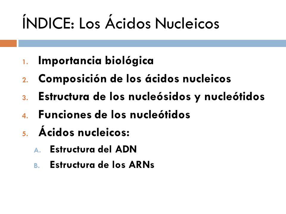 ÍNDICE: Los Ácidos Nucleicos