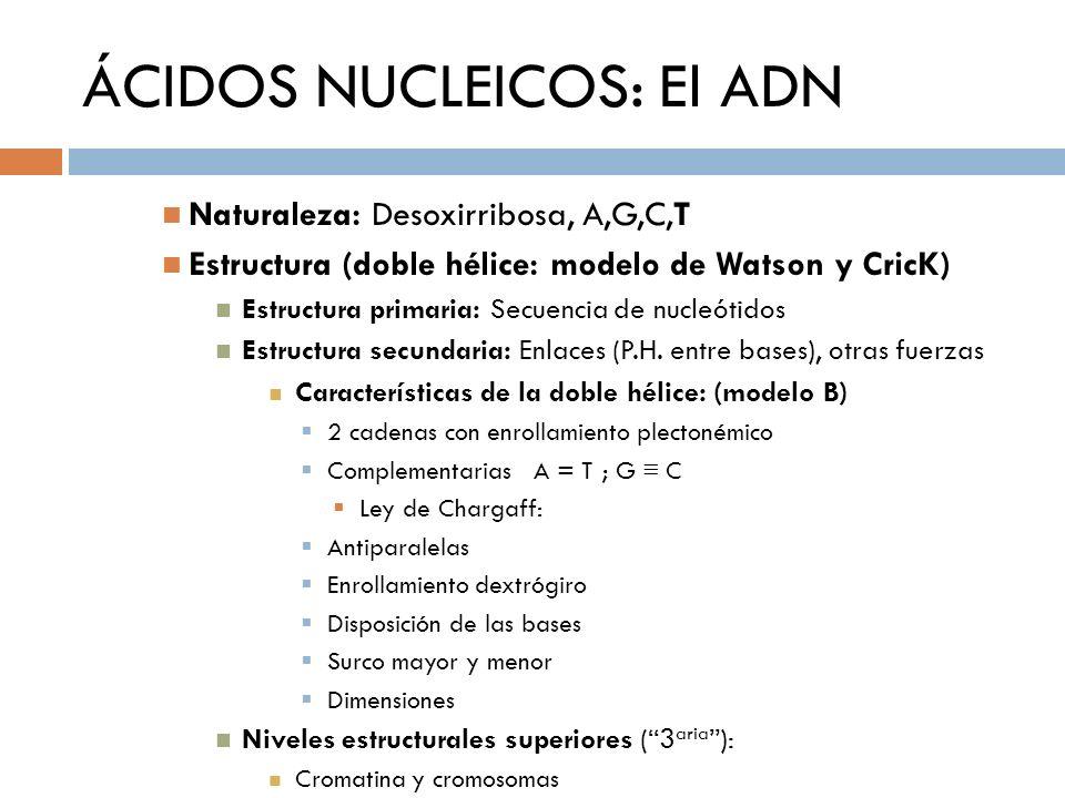 ÁCIDOS NUCLEICOS: El ADN