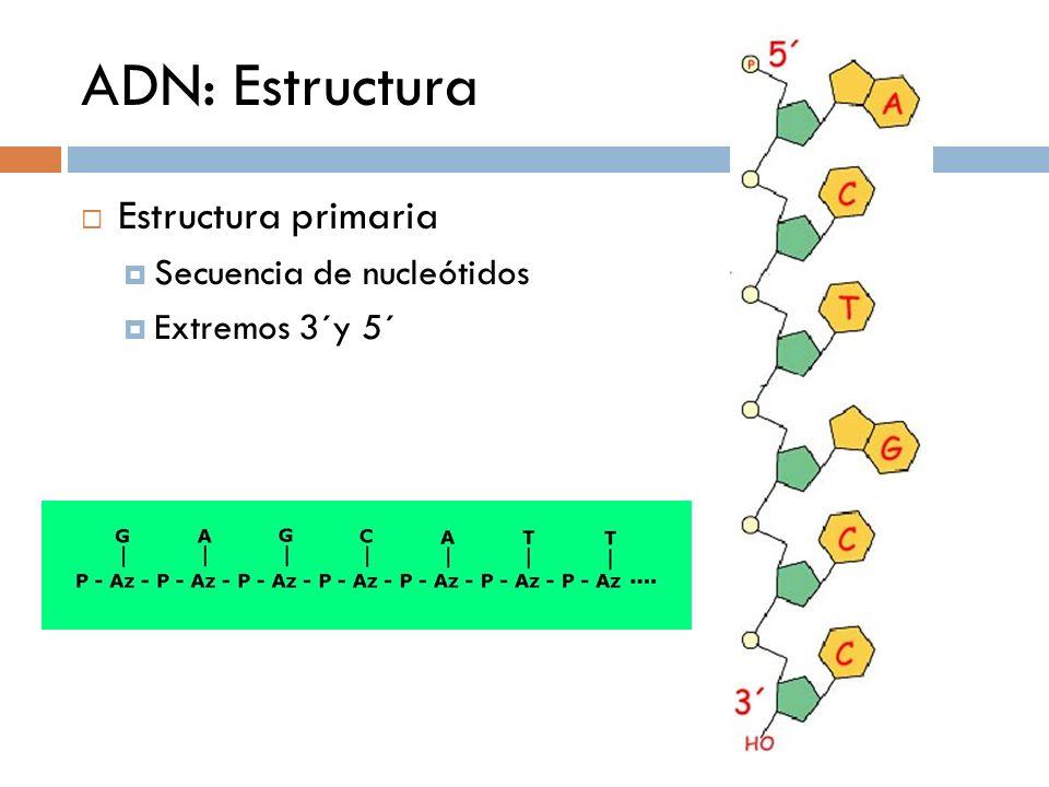 ADN: Estructura Estructura primaria Secuencia de nucleótidos