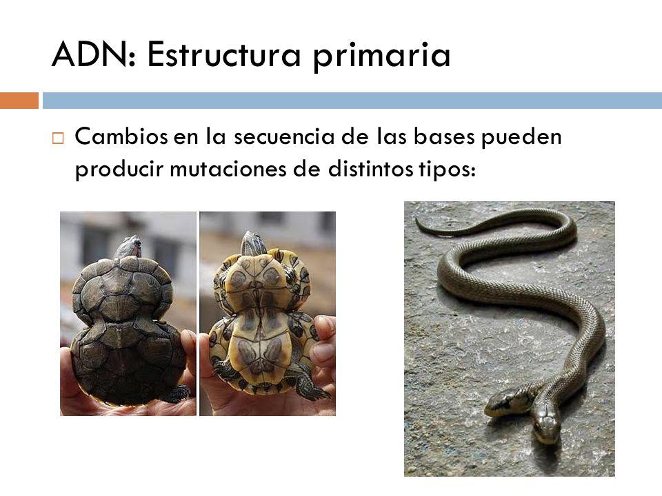 ADN: Estructura primaria