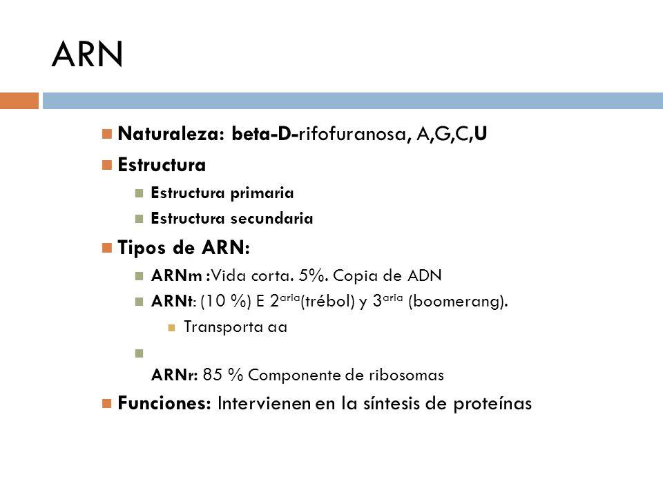 ARN Naturaleza: beta-D-rifofuranosa, A,G,C,U Estructura Tipos de ARN: