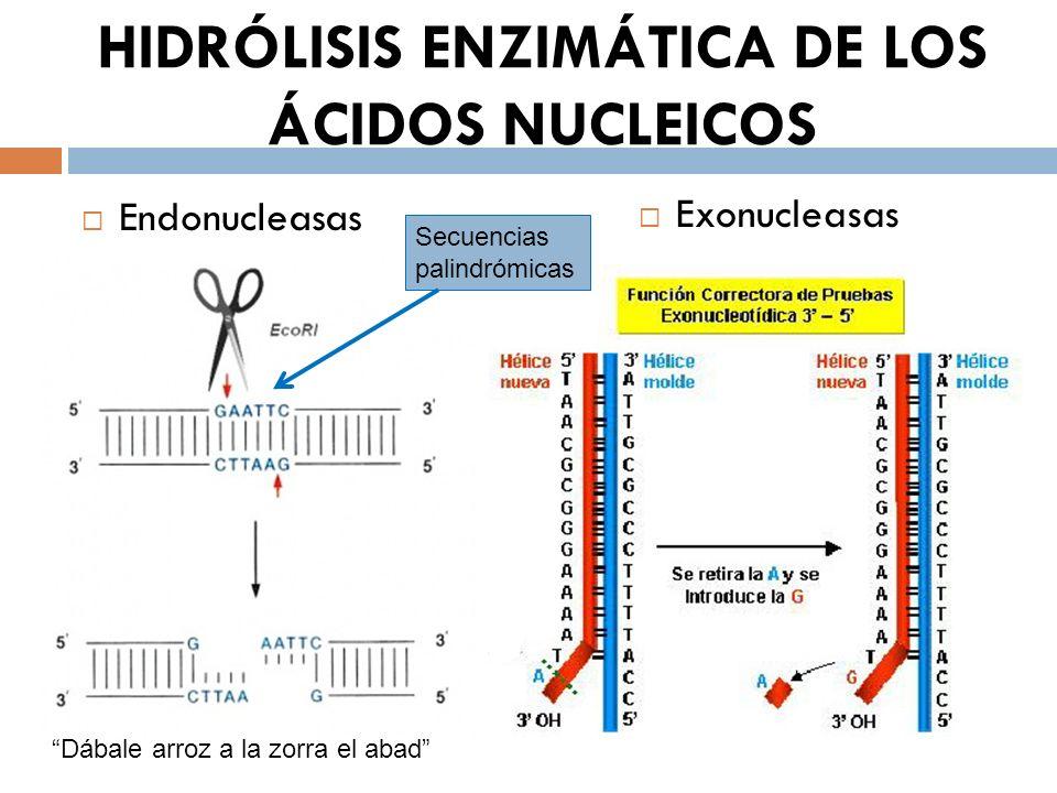 HIDRÓLISIS ENZIMÁTICA DE LOS ÁCIDOS NUCLEICOS
