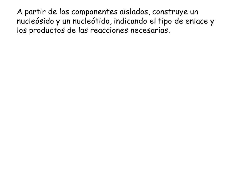 A partir de los componentes aislados, construye un nucleósido y un nucleótido, indicando el tipo de enlace y los productos de las reacciones necesarias.