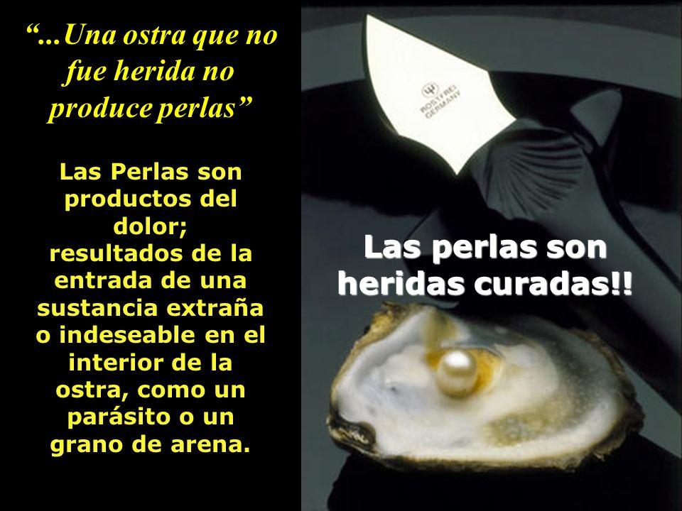 ...Una ostra que no fue herida no produce perlas