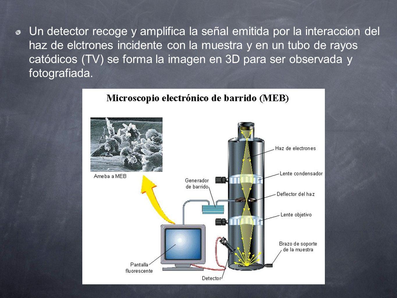 Un detector recoge y amplifica la señal emitida por la interaccion del haz de elctrones incidente con la muestra y en un tubo de rayos catódicos (TV) se forma la imagen en 3D para ser observada y fotografiada.