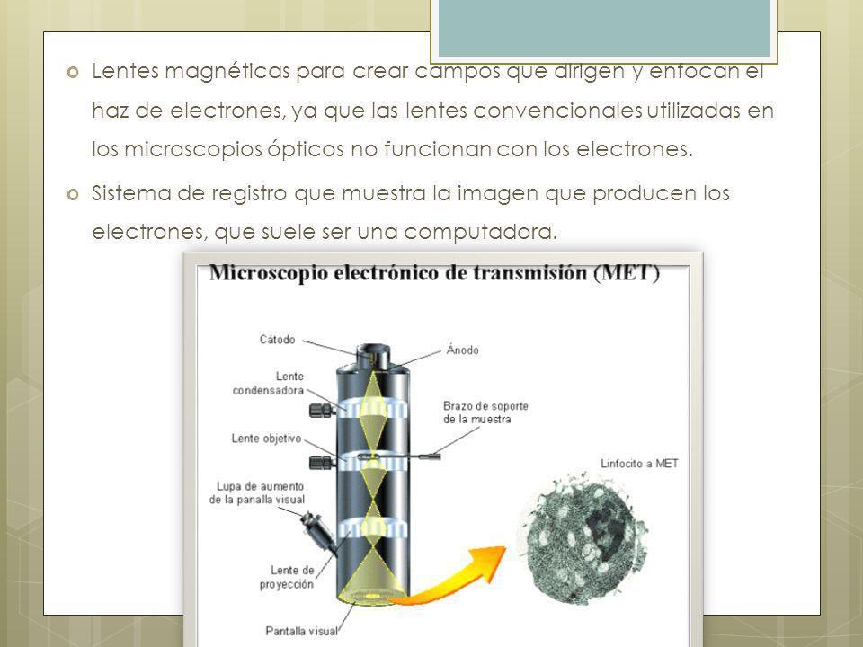 Lentes magnéticas para crear campos que dirigen y enfocan el haz de electrones, ya que las lentes convencionales utilizadas en los microscopios ópticos no funcionan con los electrones.