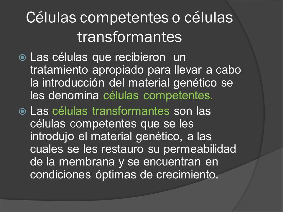 Células competentes o células transformantes
