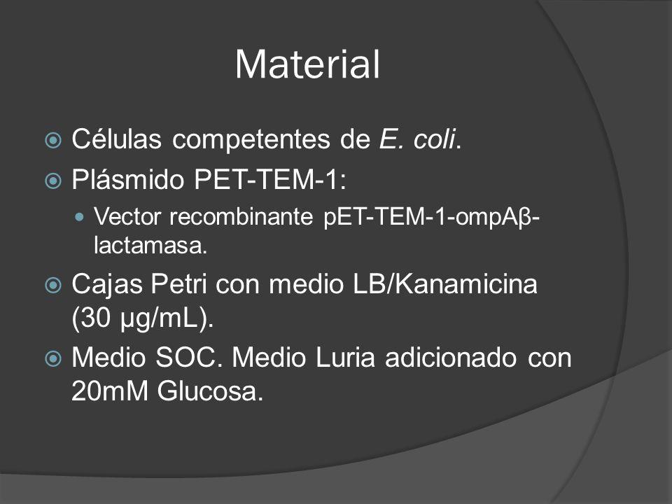 Material Células competentes de E. coli. Plásmido PET-TEM-1: