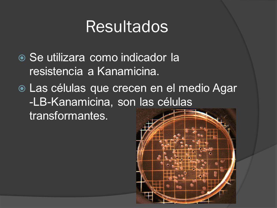 Resultados Se utilizara como indicador la resistencia a Kanamicina.