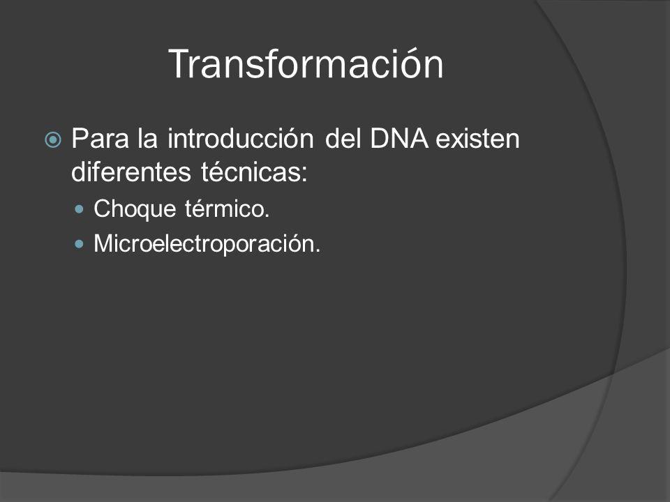 Transformación Para la introducción del DNA existen diferentes técnicas: Choque térmico.