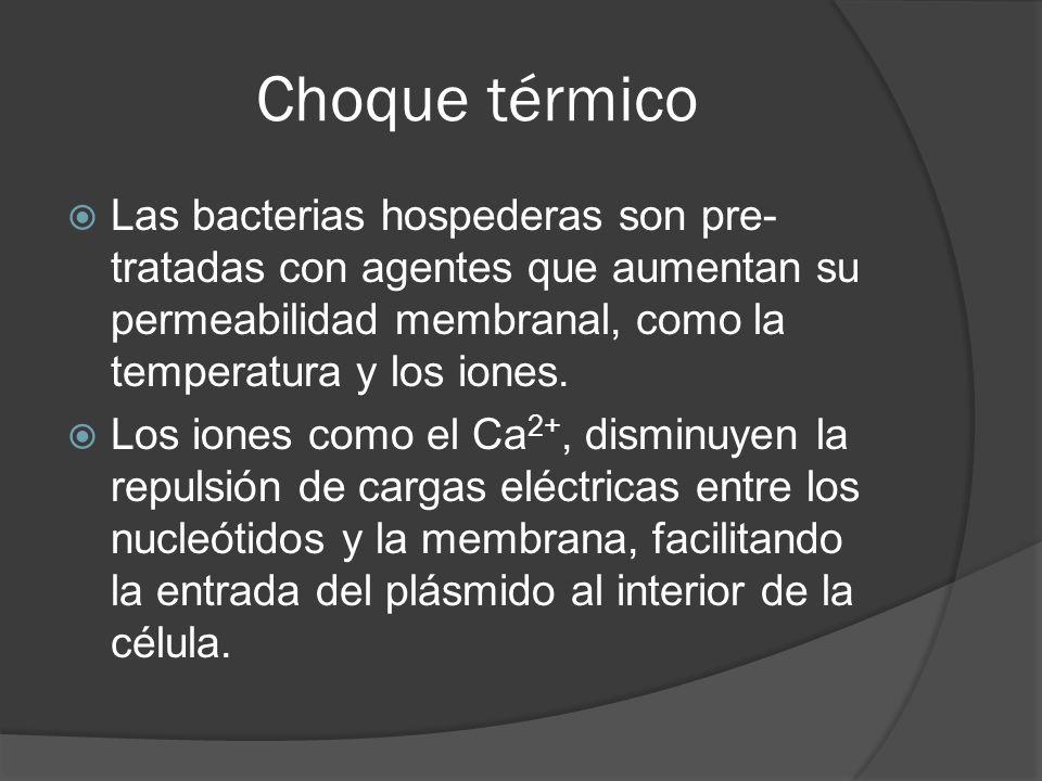 Choque térmico Las bacterias hospederas son pre-tratadas con agentes que aumentan su permeabilidad membranal, como la temperatura y los iones.