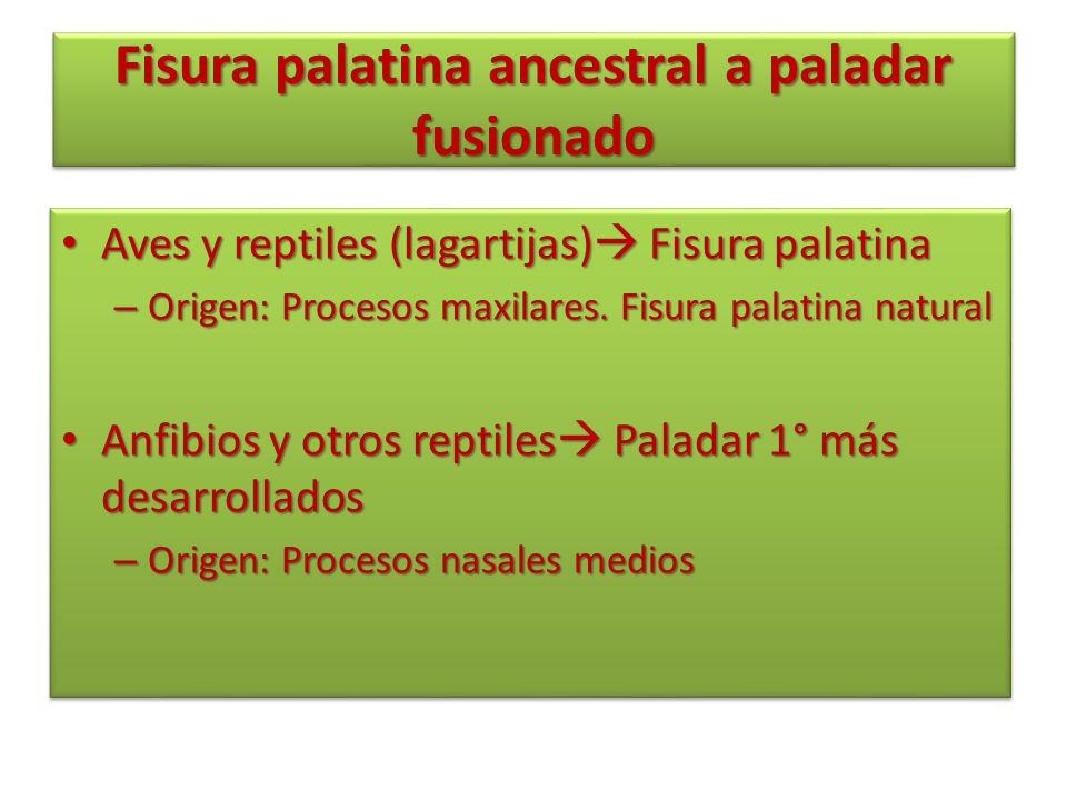 Fisura palatina ancestral a paladar fusionado