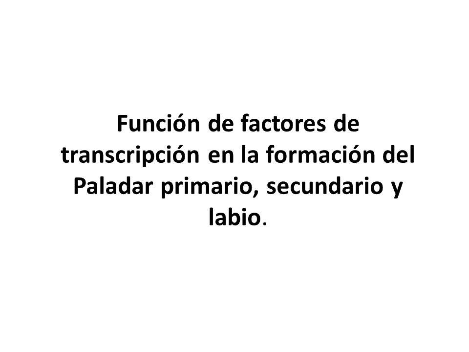 Función de factores de transcripción en la formación del Paladar primario, secundario y labio.