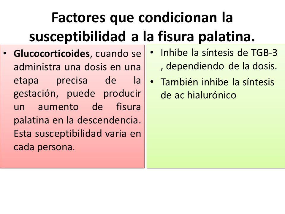 Factores que condicionan la susceptibilidad a la fisura palatina.