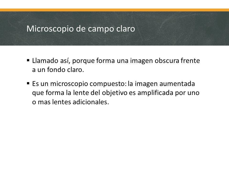 Microscopio de campo claro