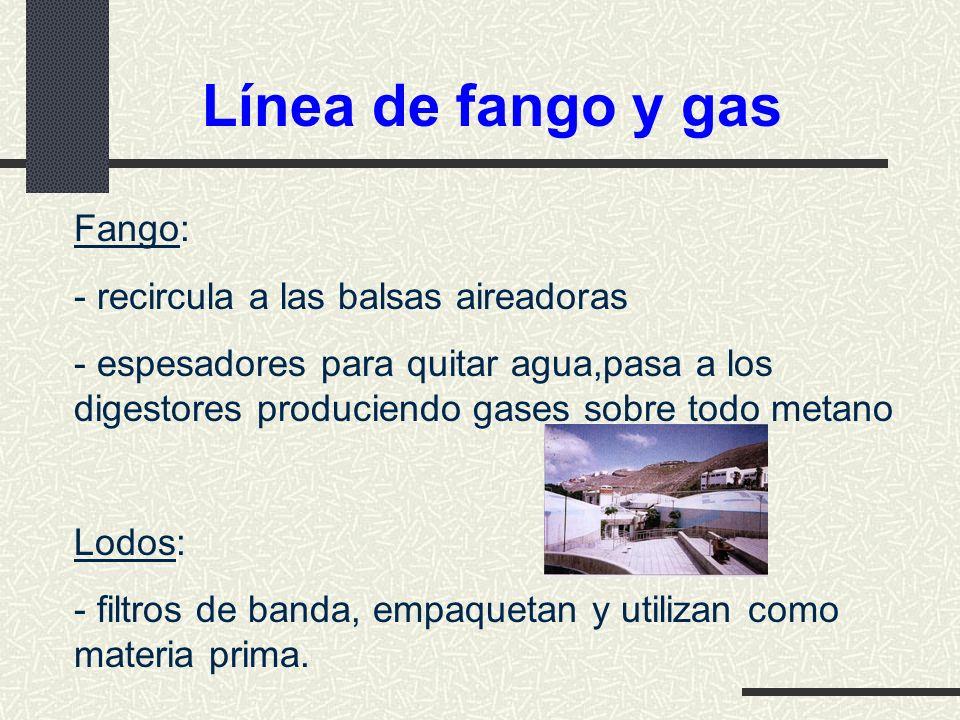 Línea de fango y gas Fango: - recircula a las balsas aireadoras
