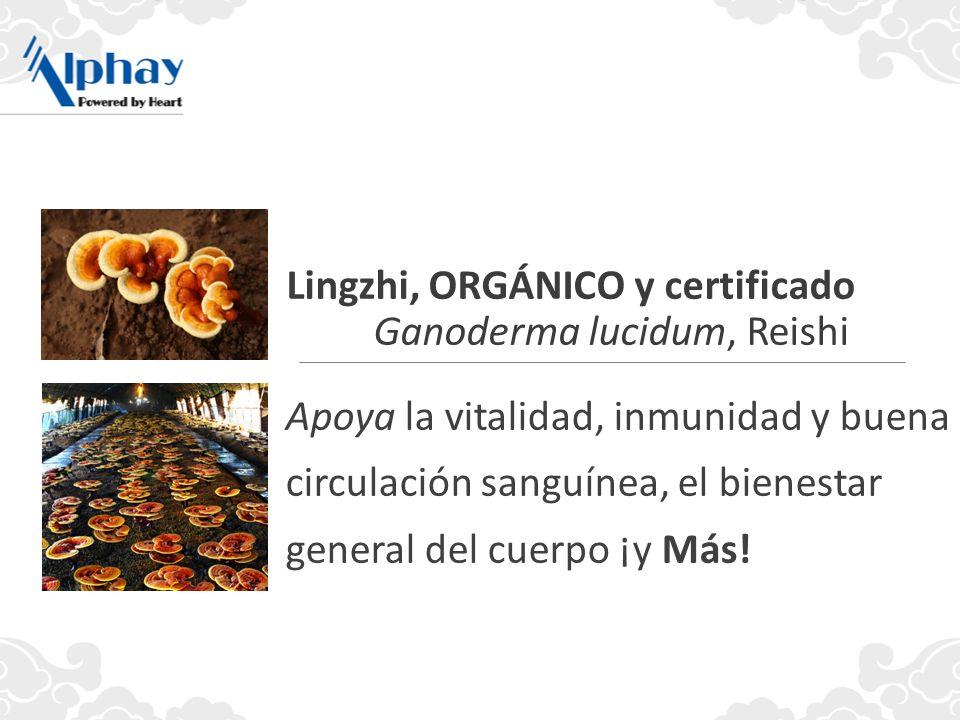 Lingzhi, ORGÁNICO y certificado Ganoderma lucidum, Reishi
