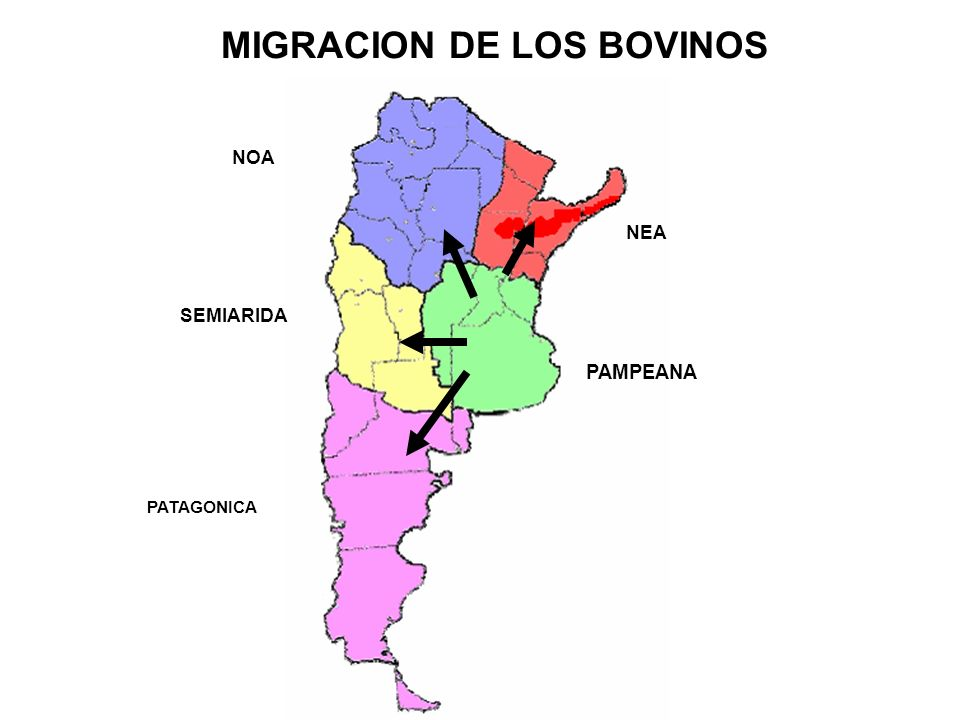 MIGRACION DE LOS BOVINOS