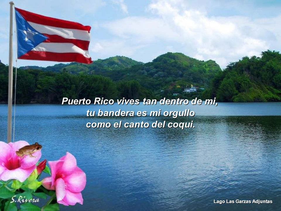 Puerto Rico vives tan dentro de mi, tu bandera es mi orgullo