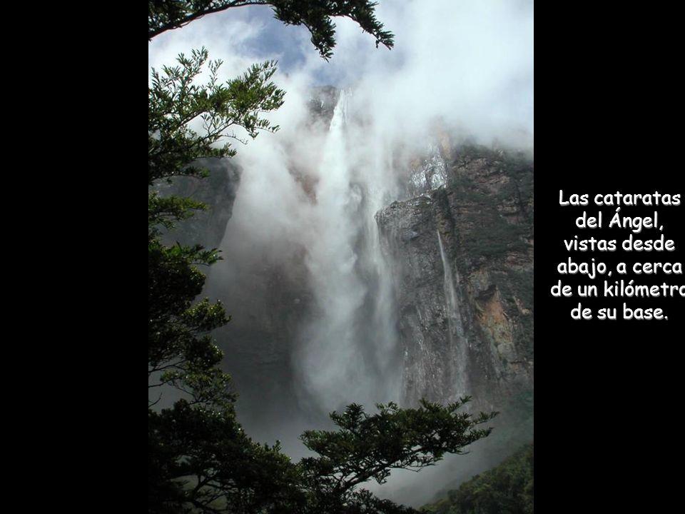 Las cataratas del Ángel, vistas desde abajo, a cerca de un kilómetro de su base.