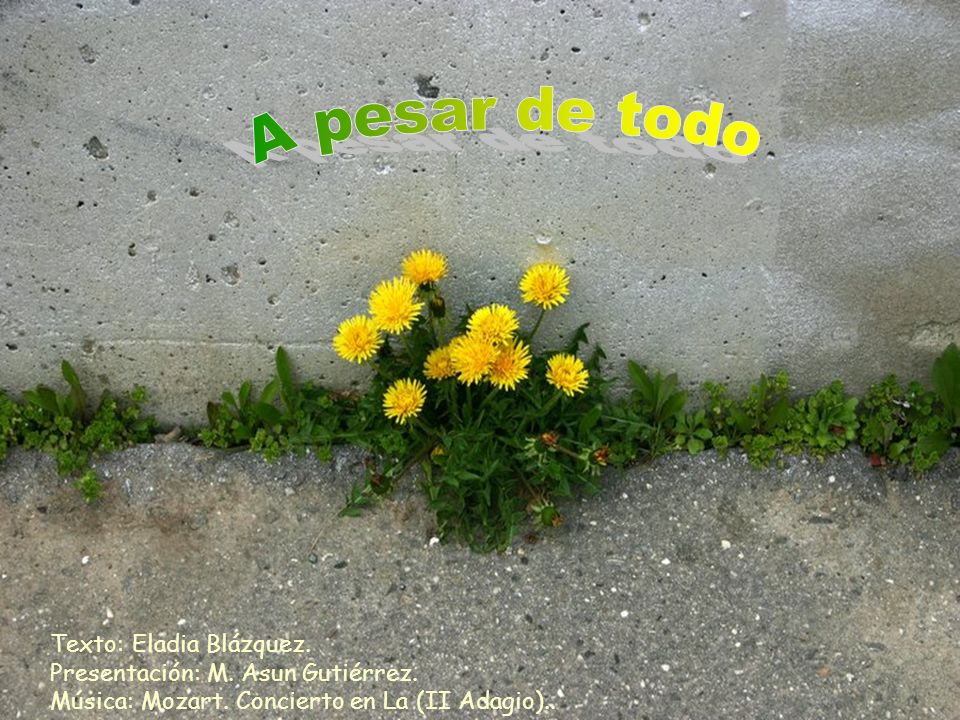 A pesar de todoTexto: Eladia Blázquez.Presentación: M.