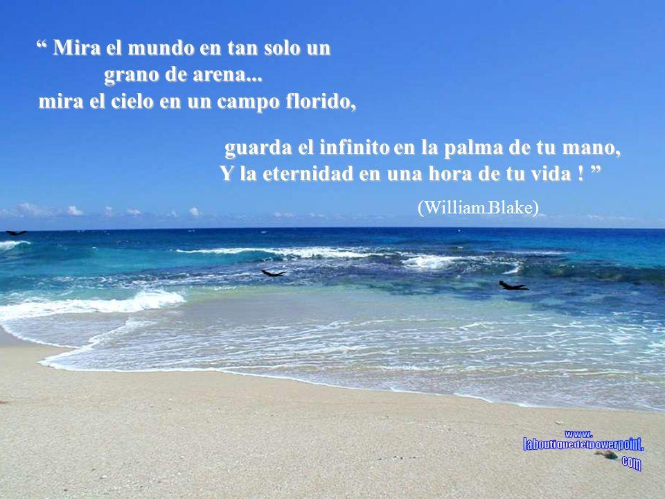Veja o mundo num grão de areia