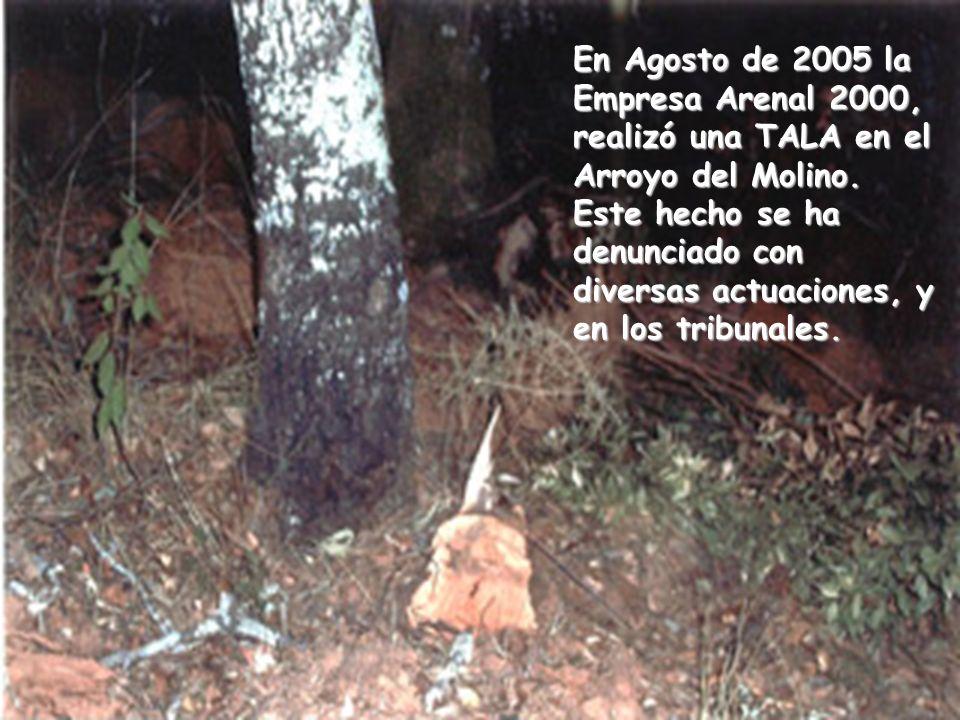 En Agosto de 2005 la Empresa Arenal 2000, realizó una TALA en el Arroyo del Molino.