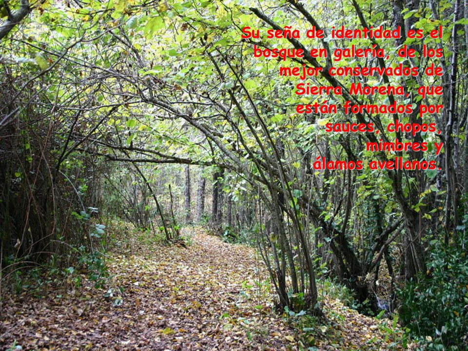 Su seña de identidad es el bosque en galería, de los mejor conservados de