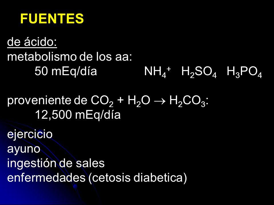 FUENTES de ácido: metabolismo de los aa: 50 mEq/día NH4+ H2SO4 H3PO4