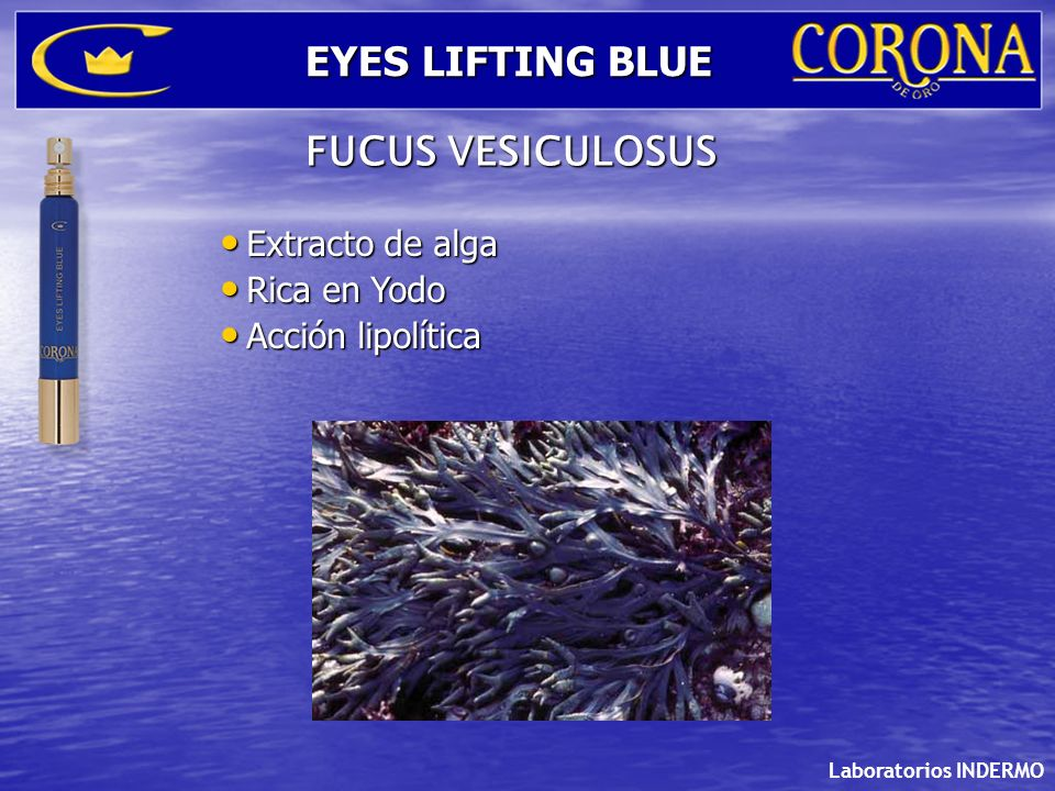 EYES LIFTING BLUE FUCUS VESICULOSUS Extracto de alga Rica en Yodo