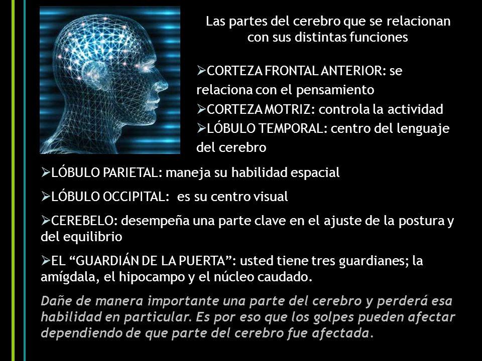 Las partes del cerebro que se relacionan con sus distintas funciones