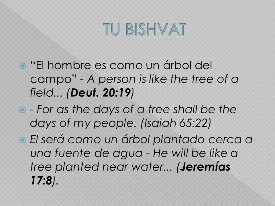 TU BISHVAT El hombre es como un árbol del campo - A person is like the tree of a field... (Deut. 20:19)
