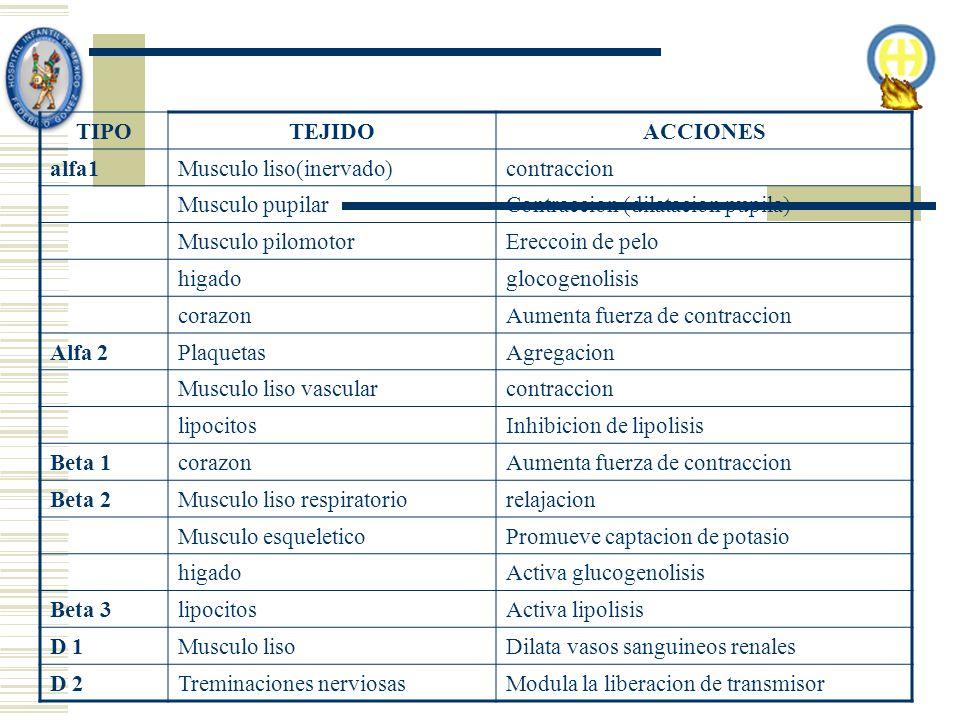 TIPO TEJIDO. ACCIONES. alfa1. Musculo liso(inervado) contraccion. Musculo pupilar. Contraccion (dilatacion pupila)