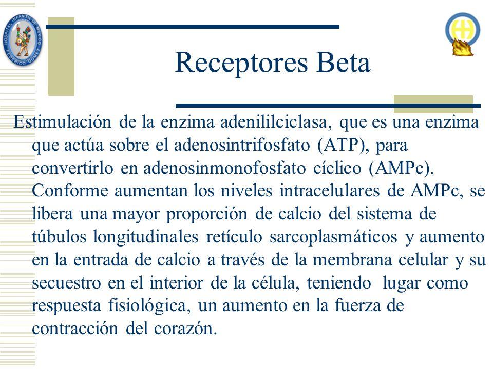 Receptores Beta