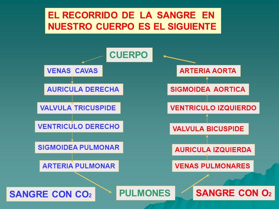 Circuito Que Realiza La Sangre : Unidad vi sistema circulatorio ppt video online descargar