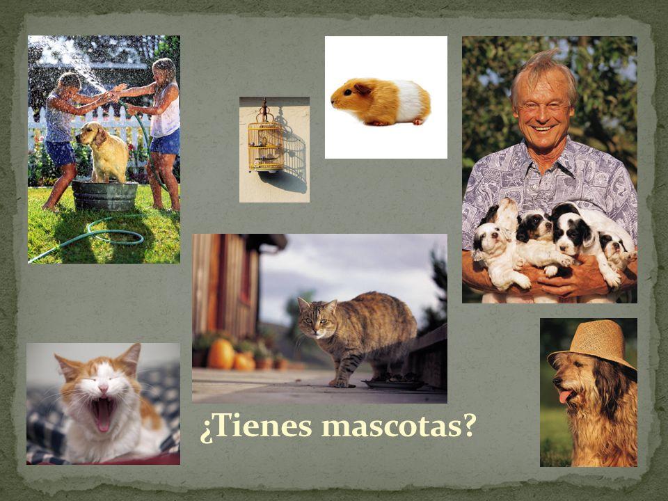 ¿Tienes mascotas