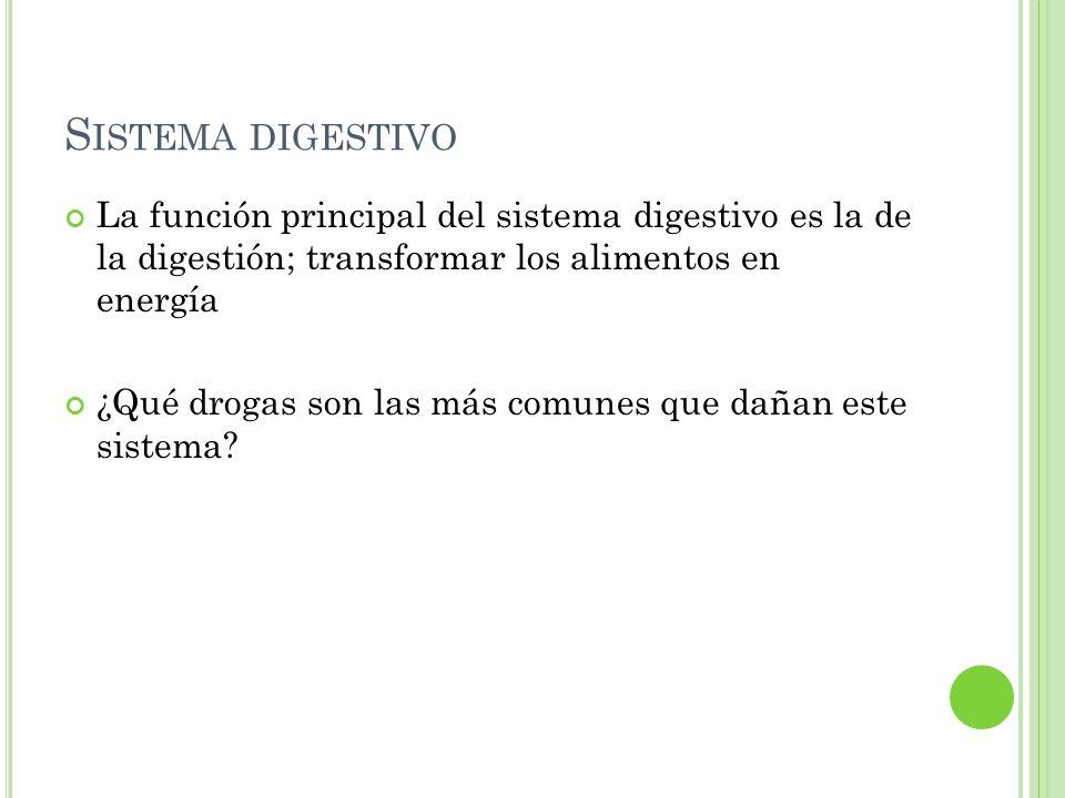 Sistema digestivo La función principal del sistema digestivo es la de la digestión; transformar los alimentos en energía.