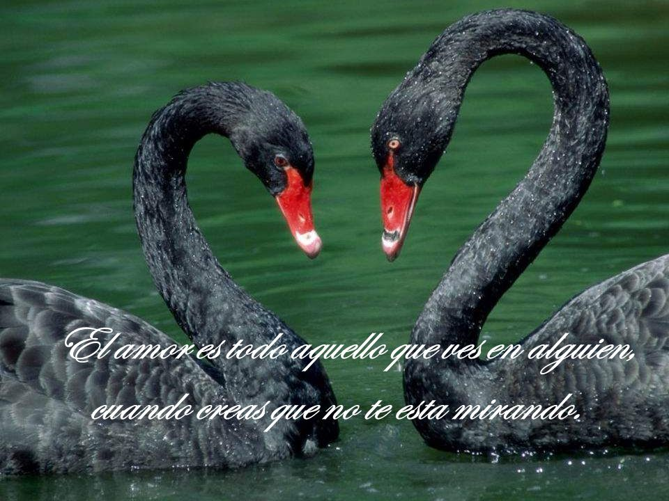 El amor es todo aquello que ves en alguien,
