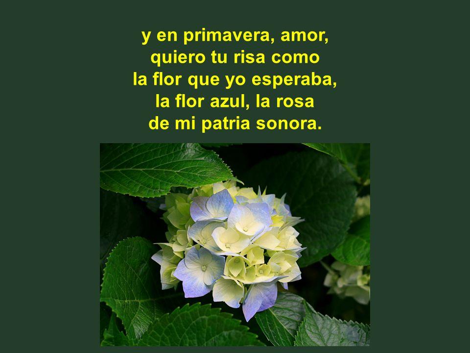 y en primavera, amor, quiero tu risa como la flor que yo esperaba, la flor azul, la rosa de mi patria sonora.