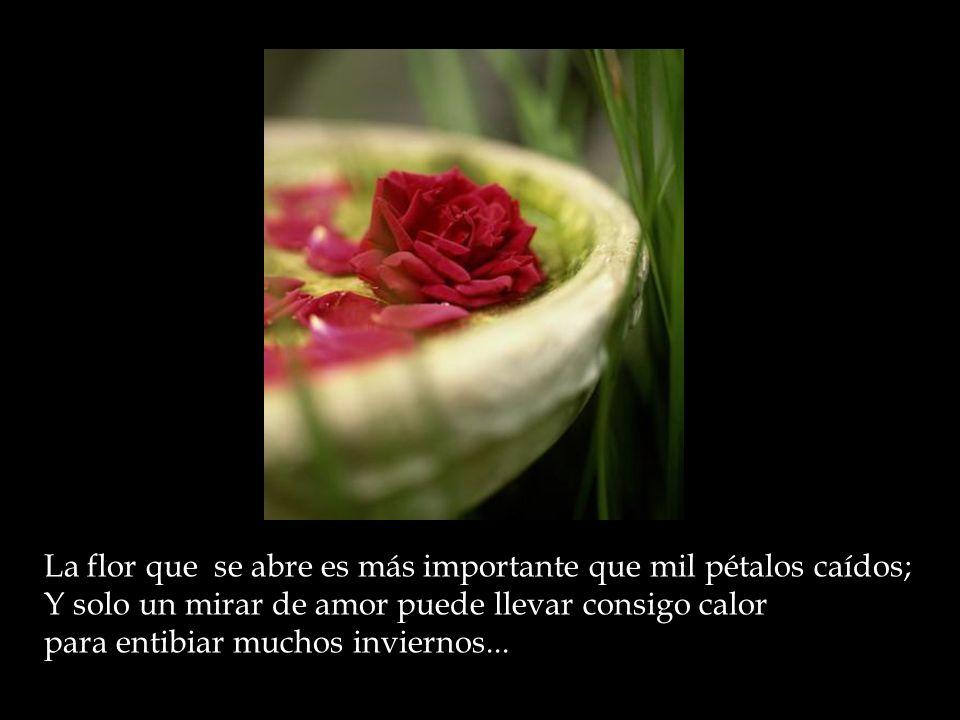 La flor que se abre es más importante que mil pétalos caídos; Y solo un mirar de amor puede llevar consigo calor para entibiar muchos inviernos...