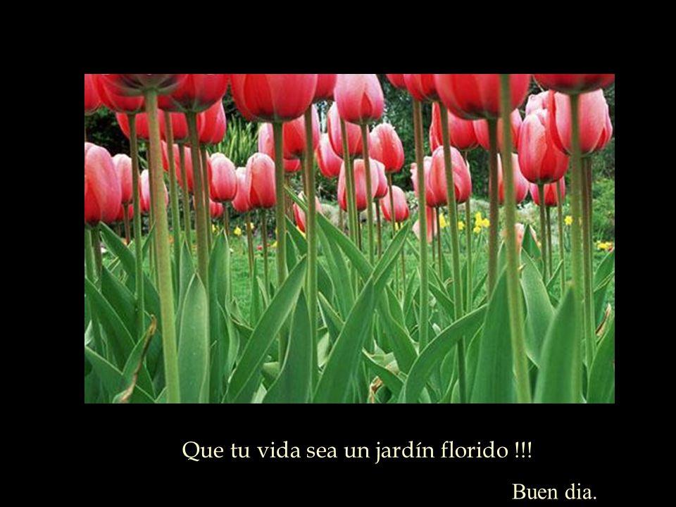 Que tu vida sea un jardín florido !!!