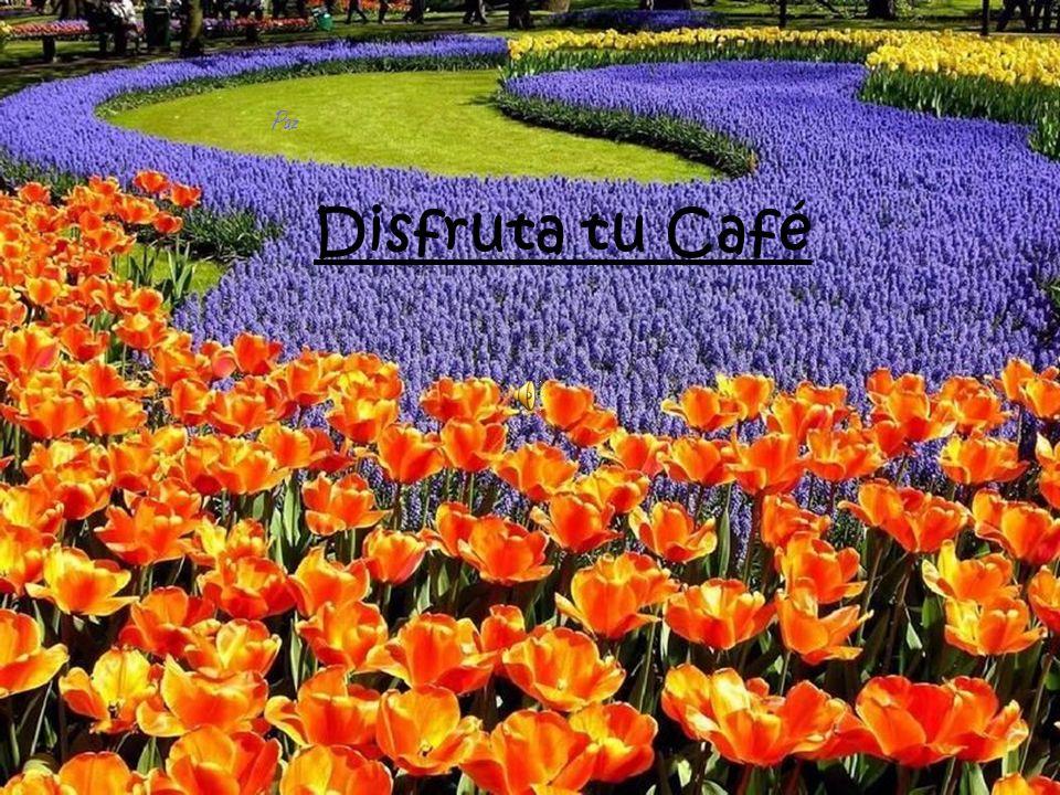 Paz Disfruta tu Café