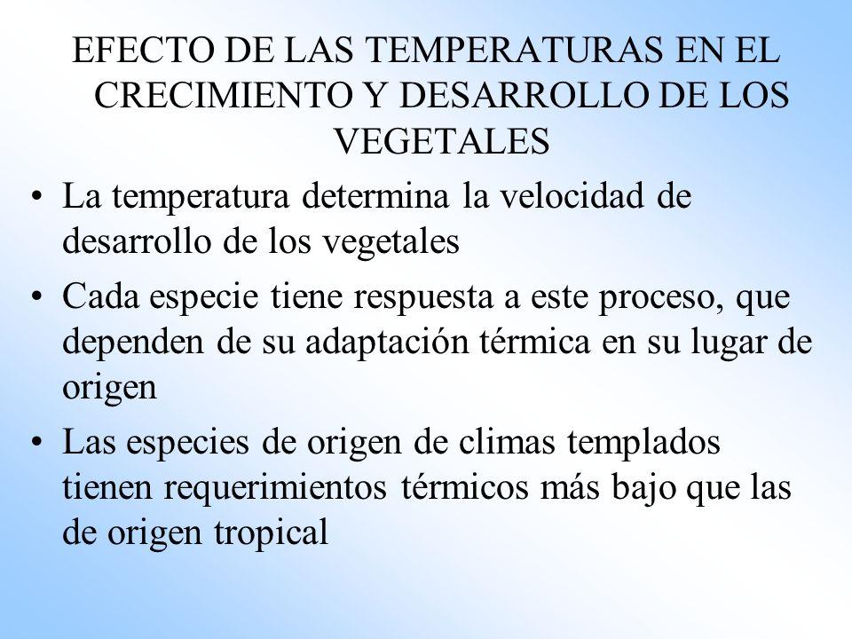 EFECTO DE LAS TEMPERATURAS EN EL CRECIMIENTO Y DESARROLLO DE LOS VEGETALES