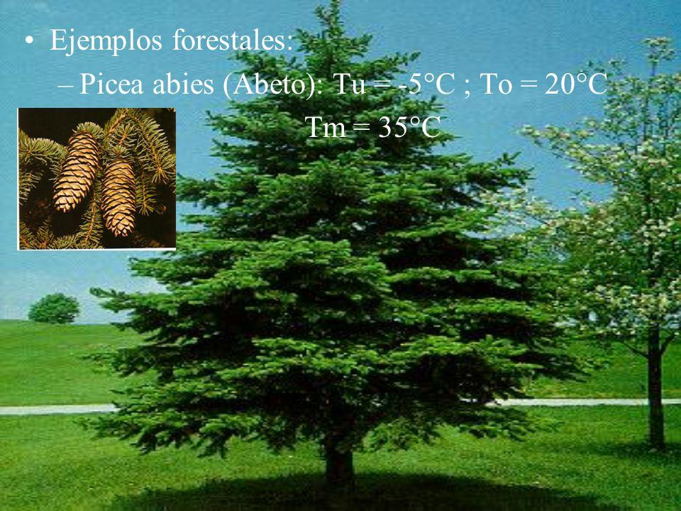 Ejemplos forestales: Picea abies (Abeto): Tu = -5°C ; To = 20°C Tm = 35°C