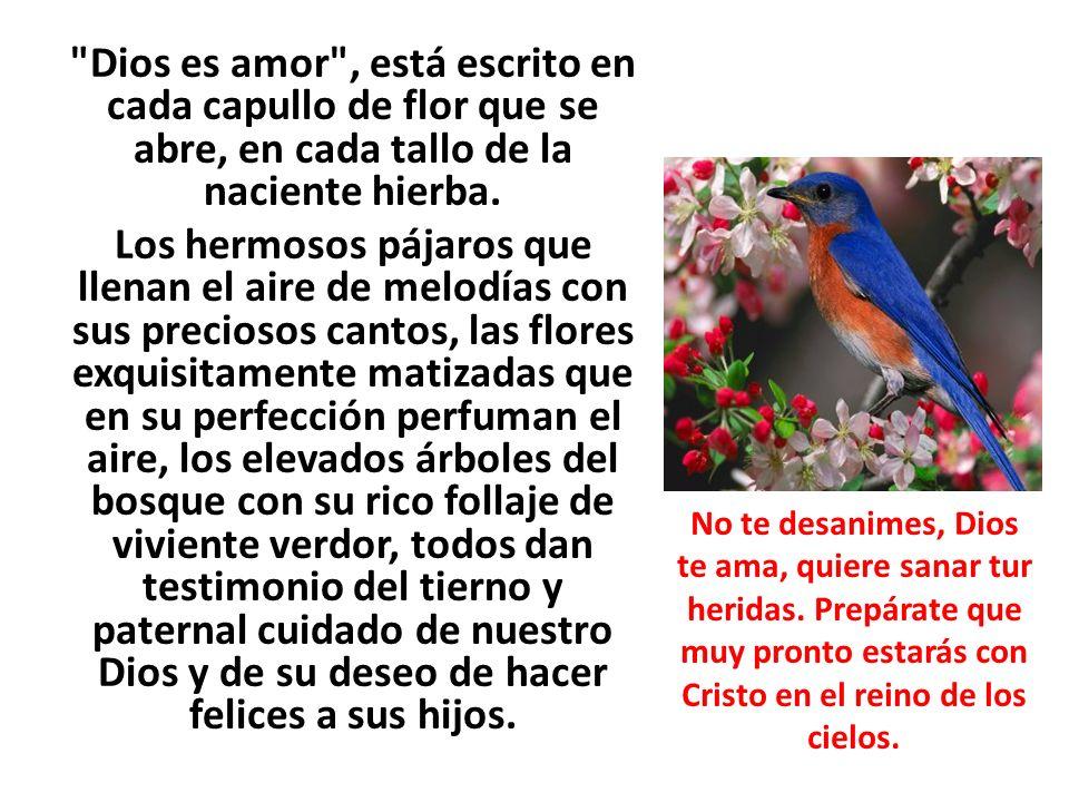 Dios es amor , está escrito en cada capullo de flor que se abre, en cada tallo de la naciente hierba. Los hermosos pájaros que llenan el aire de melodías con sus preciosos cantos, las flores exquisitamente matizadas que en su perfección perfuman el aire, los elevados árboles del bosque con su rico follaje de viviente verdor, todos dan testimonio del tierno y paternal cuidado de nuestro Dios y de su deseo de hacer felices a sus hijos.
