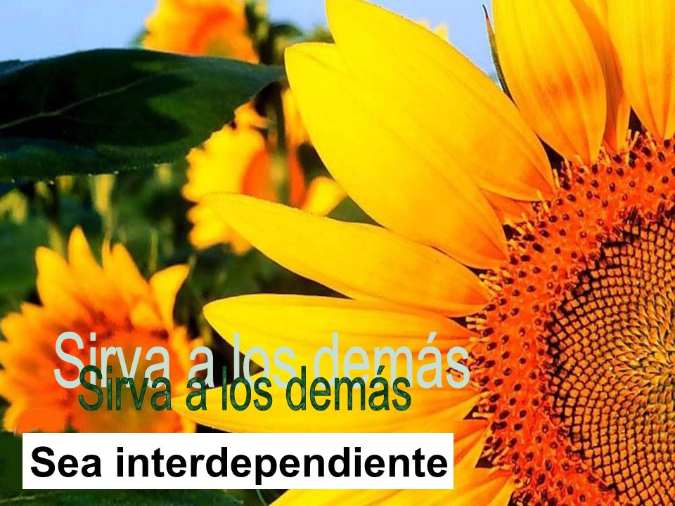 Sirva a los demás Sea interdependiente