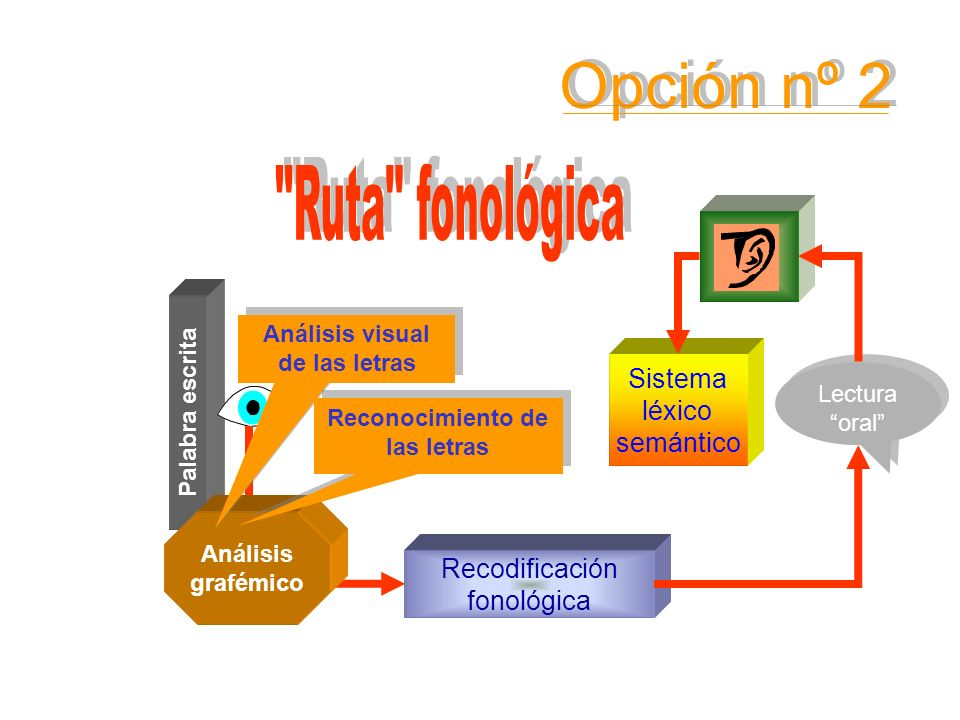 Opción nº 2 Ruta fonológica Sistema léxico semántico Conocimiento de